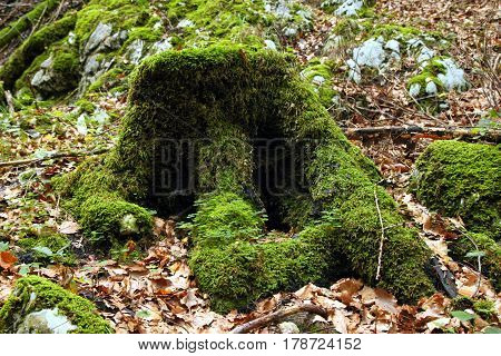 Travel To Sankt-wolfgang, Austria. The Stump With The Green Moss In The Mountains Forest.