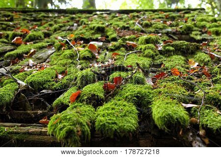 Travel To Sankt-wolfgang, Austria. The Wooden Roof With The Green Moss In The Mountains Forest.