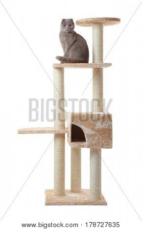 Cute funny cat and tree on white background
