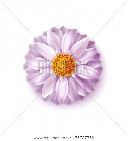Pink  flower isolated on white background. Element for a floral, festive design