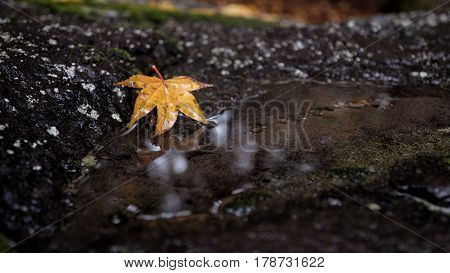 A beautiful autumn background with falling leaf