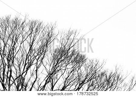 abstract tree pattern background with copyspace in black and white