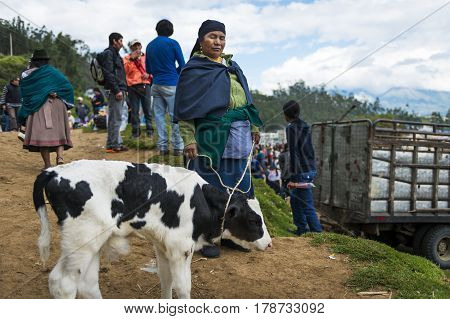 Otavalo Ecuador - February 1 2014: People at the livestock market of the town of Otavalo in Ecuador.