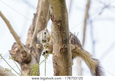 Squirrel Eating Seeds From The Tree
