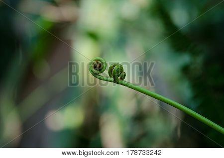 Spiral Green Leaf Background