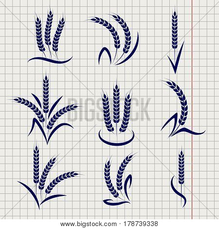 Wheat branches on notebook page background. Vector agriculture symbols design