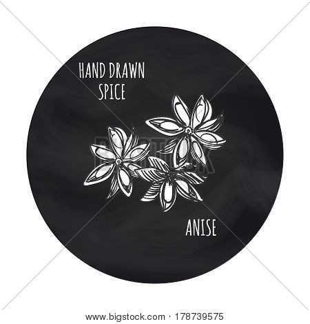 Hand drawn spice anise in blackboard round. Vector anise sketch icon design