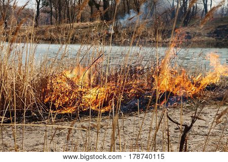 Strong fire in the forest on the lake. A lot of smoke on the background of the trees. Ashes and fire on dry grass close-up. Large black burned area on the river bank