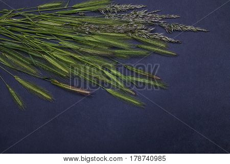beautiful spring flowers on spikelet green grass floral seasonal blossom design on grey background copy space