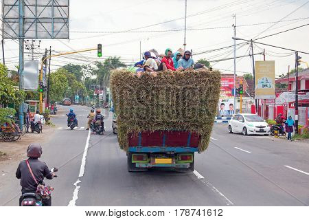 JAVA, INDONESIA - 19th december 2016: Local workers on top of  hay in a truck in the countryside from Java Indonesia