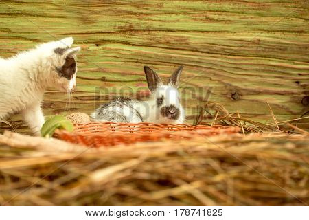 Cute Small Cat And Little Rabbit Playing In Hay