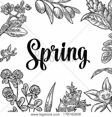 Square poster with flower, blooming branch, leaves, grass. Spring hand drawn lettering. Vector vintage engraving illustration. Isolated on white background.