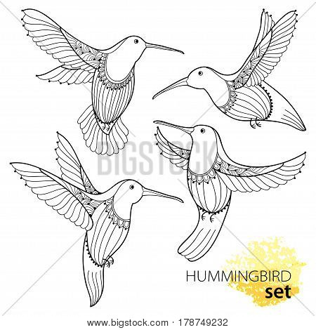 Vector set with flying Hummingbird or Colibri in contour style isolated on white background. Outline small tropical bird with ornate wings for summer design and coloring book.