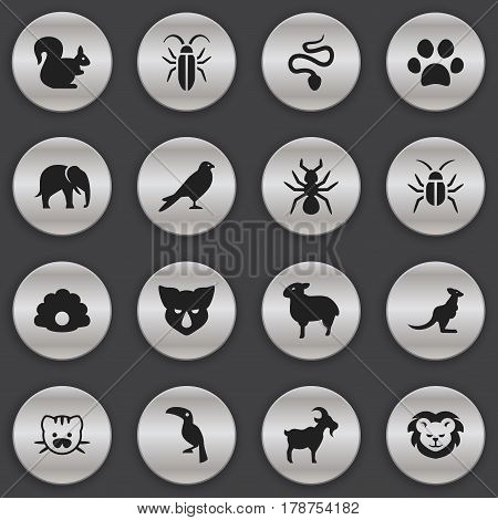 Set Of 16 Editable Animal Icons. Includes Symbols Such As Eagle, Trunked Animal, Conch And More. Can Be Used For Web, Mobile, UI And Infographic Design.