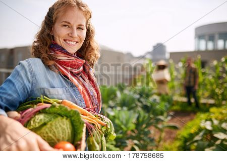 Female gardener tending to organic crops at community garden and picking up a bountiful basket full of fresh produce