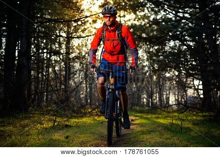 Cyclist Riding the Bike on the Trail in the Beautiful Fairy Pine Forest. Adventure and Travel Concept.
