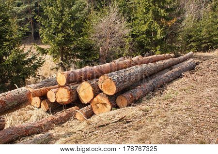 Timber harvesting in the forest. A pile of felled pine trees. Timber industry