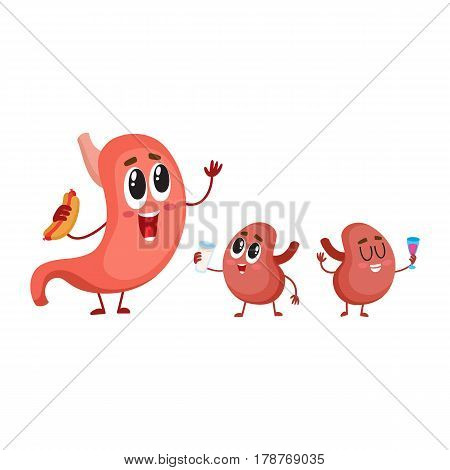 Cute and funny, smiling human stomach and kidney characters, digestive organs, cartoon vector illustration isolated on white background. Healthy human stomach and kidney characters, digestive system