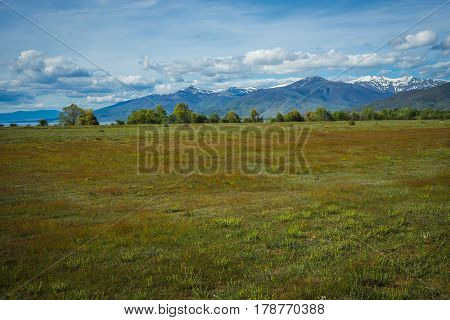 Blooming Field On Background Of Snow-capped Mountains