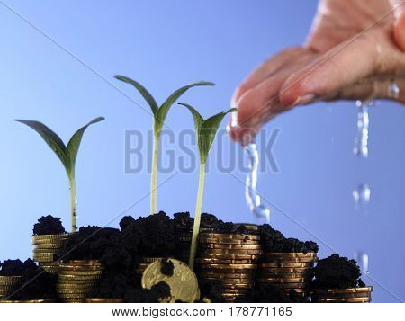 hand watering growing plant