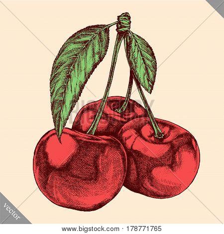Engrave cherry hand drawn graphic illustration vector art