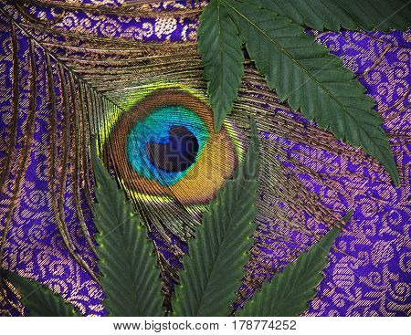 Abstract background with peacock feather and cannabis leaves detail over purple pattern