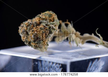Macro detail of dried cannabis bud (ambrosia strain) over reflective glass surface on dark background - medical marijuana concept