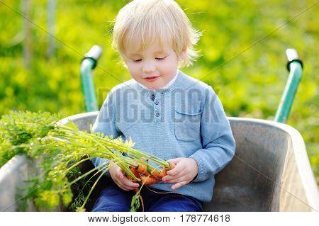 Boy Having Fun In A Wheelbarrow In Domestic Garden