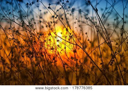 Dried flowers on a background sunset. Shallow depth of field