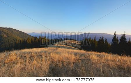 Wild Field Of Grass In The Carpatian Mountains At The Sunset. Scenic Landscape.