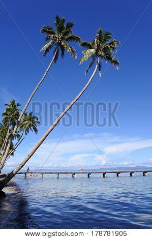 SAVUSAVU, FIJI - 15 JAN 2017: Landscape of a tropical beach in Savusavu peninsula in Vanua Levu Island Fiji.Savusavu is a popular travel destination in Fiji known for its diving and yachting facilities.