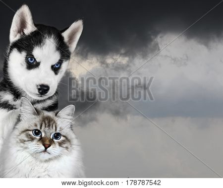 Cat and dog infront of a dark sky, sad anxious mood.