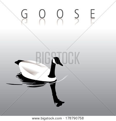 A lovely tranquil goose swimming for print or web