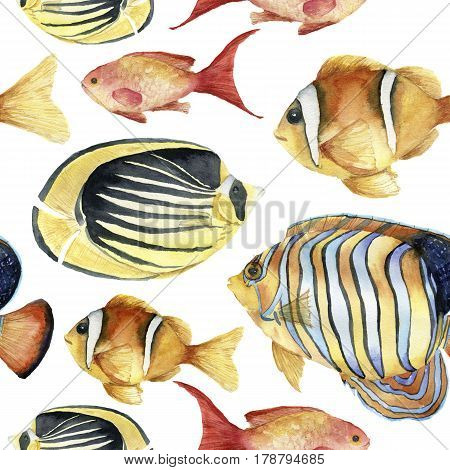 Watercolor tropic sea pattern. Hand painted tropic fish: angelfish, butterflyfish, clownfish isolated on white background. Underwater illustration