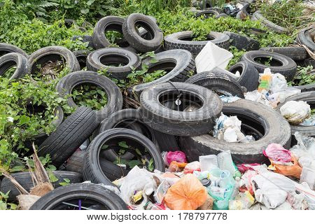 Used Tyre At Garbage Dump Collect Rain Water Breed Mosquito