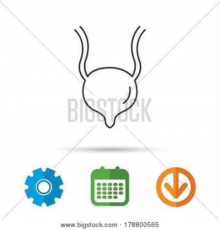 Urinary bladder icon. Human body organ sign. Urology health symbol. Calendar, cogwheel and download arrow signs. Colored flat web icons. Vector