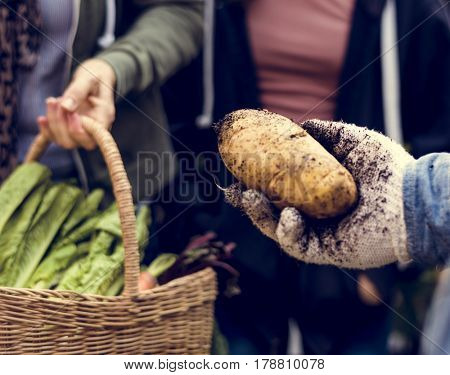 Farmer with organic nature product vegetables gardening