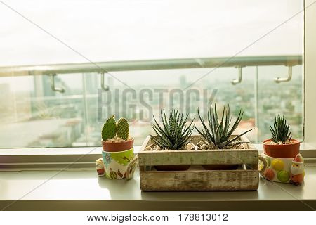 Zebra cactus in wood basket put near window glass withe copy space. Warm tone