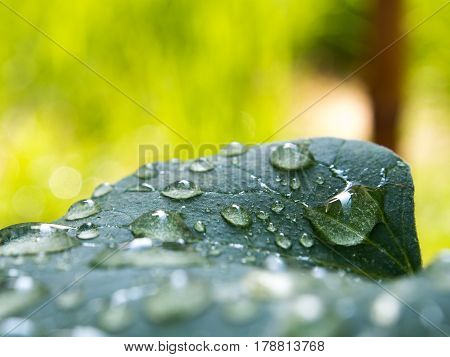 Close up water drop on melon leaf