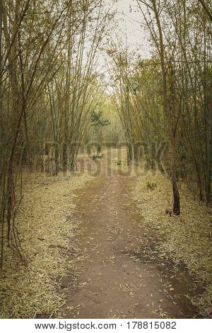 walk way between bamboo tree in the forest