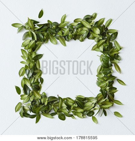 Green leaves arranged in square shape on white background