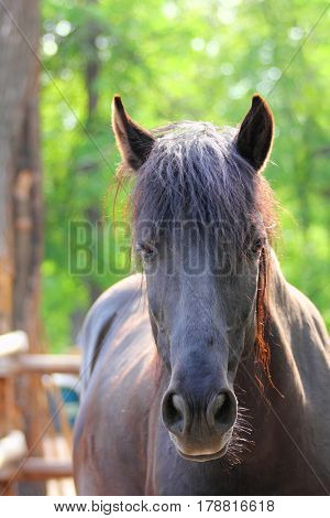 brown horse portrait at summer
