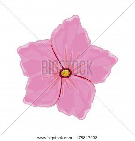 flower geranium florish image vector illustration eps 10