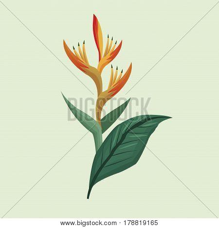 leave palm tropical natural vector illustration eps 10