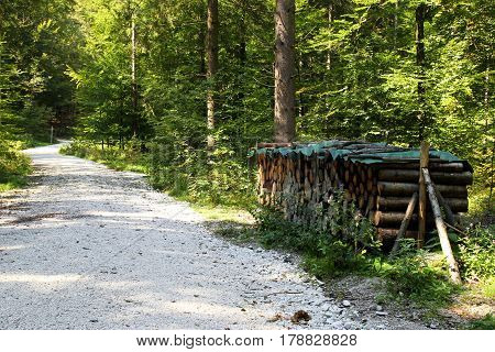 Travel To Sankt-wolfgang, Austria. The Road With The Firewood In The Green Forest