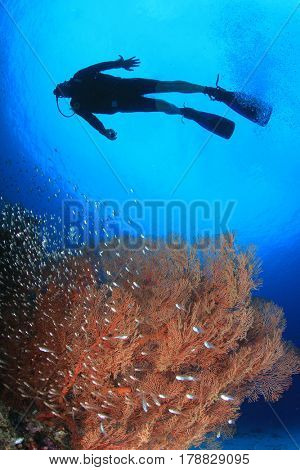 Scuba dive with fish on coral reef in ocean