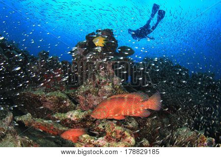 Scuba dive underwater on coral reef with tropical fish