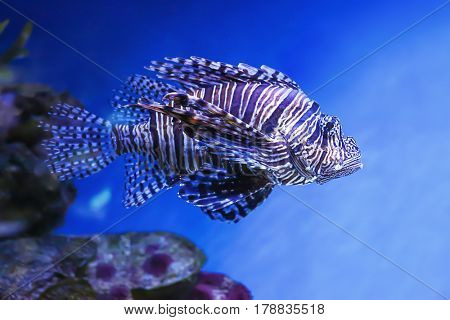 Exotic sea fish in aquarium