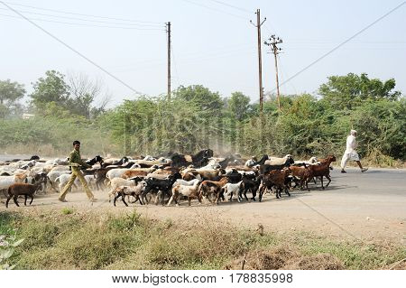 Farmer Crosses The Road With His Flock Of Sheeps