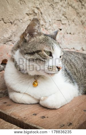 Cat Laying Down Leisure On Wooden Chair stock photo